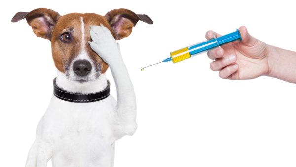 Vaccinatieadvies